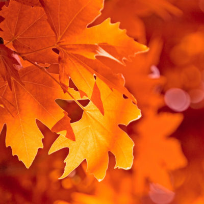 au dojo à l'automne